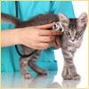 лечение животных ветеринаром на дому