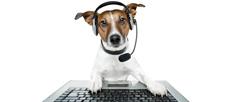 консультации в контактном центре ветеринарной клиники