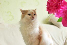 Зачем нужно стерилизовать кошек?