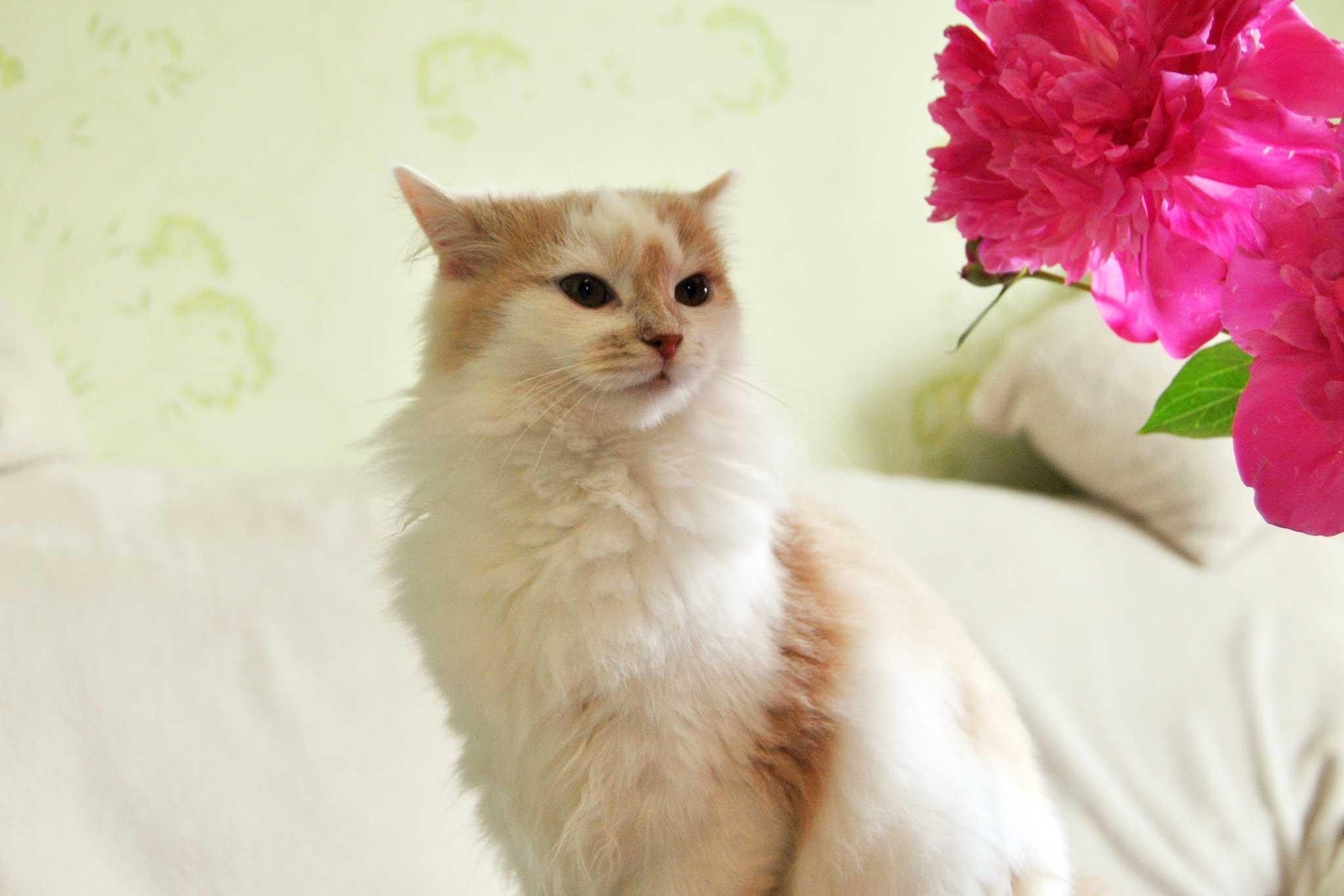 Акция: скидка 20% на стерилизацию кошки по предварительной записи на операцию стерилизации в Москве в 2018 году