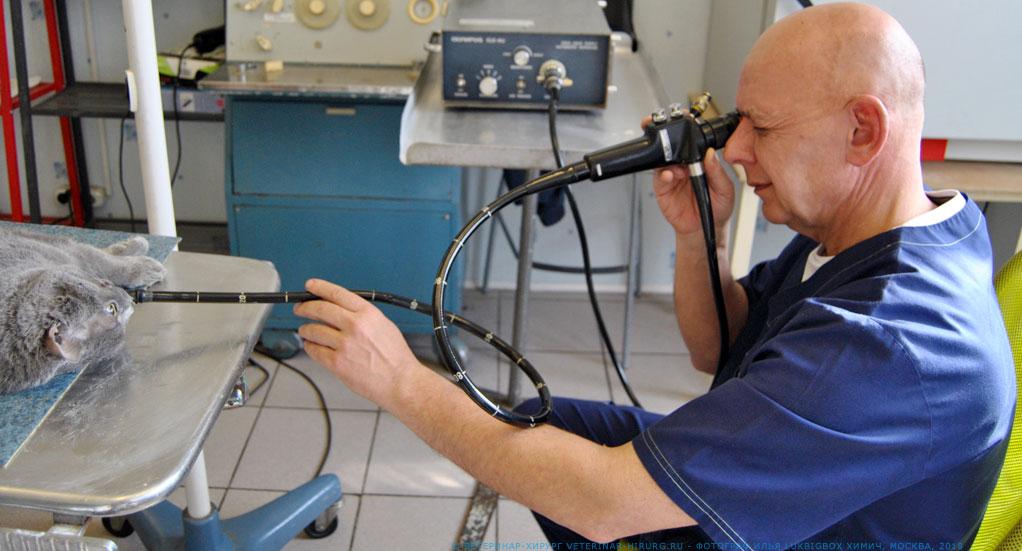 Гастроскопия на дому москва медицинская справка форма 0.46 бланк
